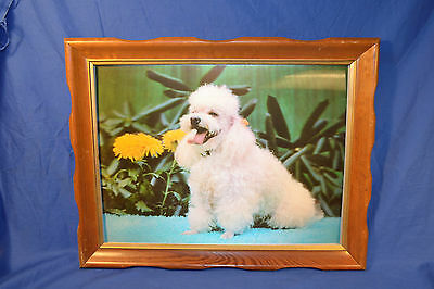"3D Lentograph Plate White Poodle Framed  Picture #124 19 X 15"" Wall Art Kitsch"