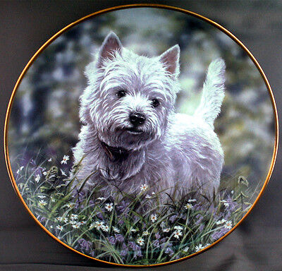 West Highland White Terrier (Westie) Dog Plate. The Bluebell Trail By Paul Doyle