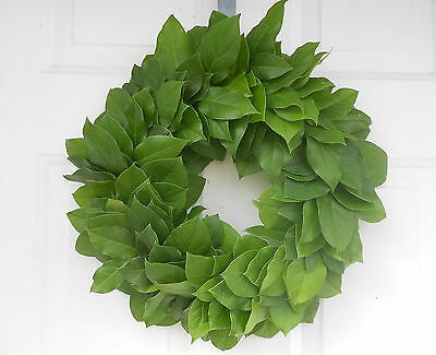 "Fresh Green Salal - Lemon Leaf Wreath to Dry 15 - 16""  Decorating Wedding Craft"