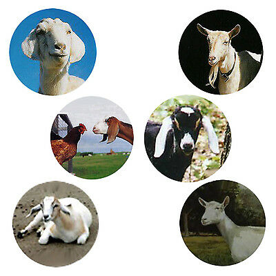 Goat  Magnets:   6 Happy Goats  for your Collection--A Great Gift