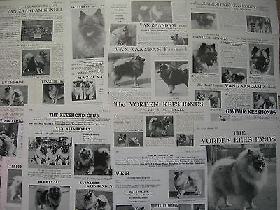 Keeshond kennel breed clippings