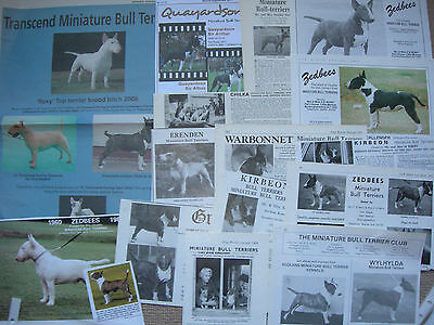 Miniature Bull Terrier kennel breed clippings