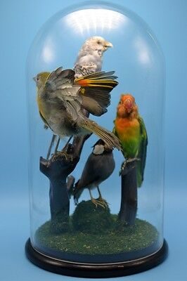 taxidermy of 4 birds hand made mounted in glass dome free P&P special gift 2#