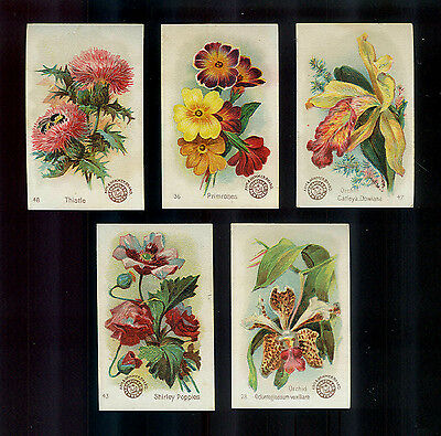 """Lot of 5 Arm & Hammer """"Beautiful Flowers"""" Victorian Trade Cards"""