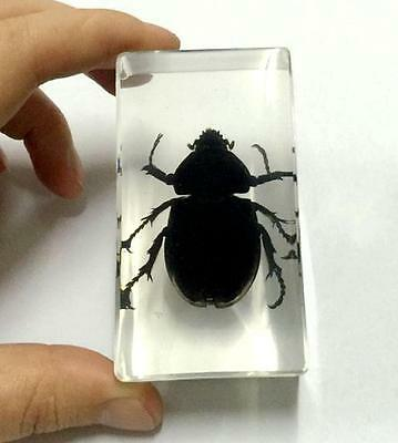 T-01 Vintage beetle lucite acrylic paperweight taxidermy Crafts