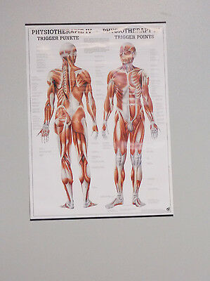 Rüdiger Poster Physiotherapie IV - Trigger Punkte - Format 50 x 70 cm