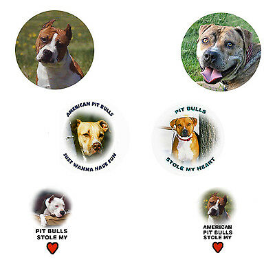 American Pit Bull Magnets:   6 Amazing APBs for your Collection-A Great Gift