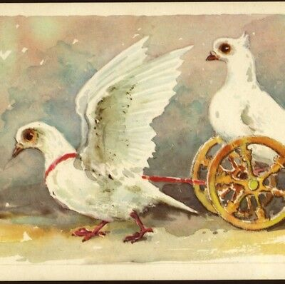 Scarce...! Circus Performing Birds,doves,pigeons,russian Vintage Postcard