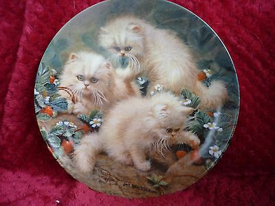 """CREAM PERSIANS""  Persian kittens Collector plate by Knowles 1987"