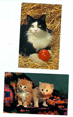 Two Cat  Postcards. Called Kitty Kitty And Sisters. Unposted