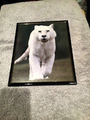 White Panther 8X10 Framed Picture