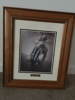 Afl Limited Edition Looney Tunes Collingwood Magpies Framed
