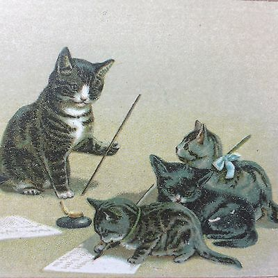 1880s CHICAGO SEWING MACHINE Victorian Advertising TRADE CARD Cats Kittens