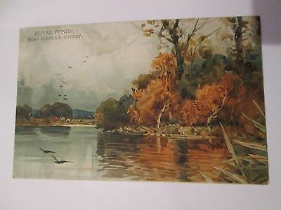 Postcard of Royal Ponds, Near Elstead, Surrey Unposted