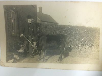 Man In Garden With Young Calf RP Social History Item