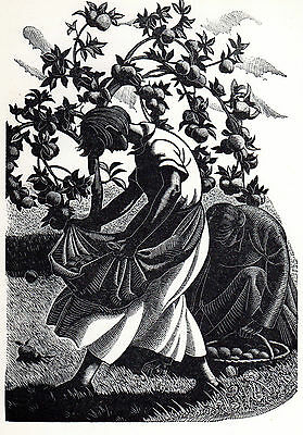 Clare Leighton - Apple Picking - original 1930's print mounted and frame ready.
