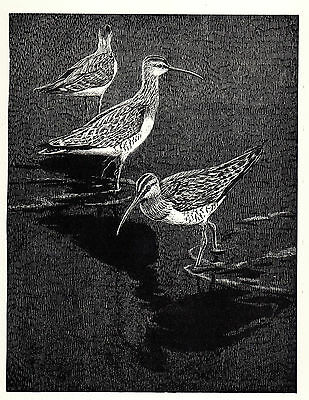 Keith Shackleton - Whimbrels original 1950's print, mounted and frame ready