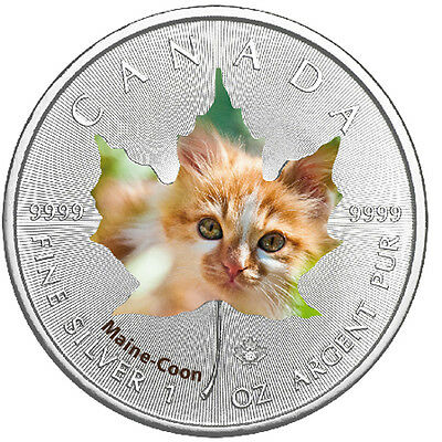 1oz Canada Maple Leaf Maine Coon Cute Kittens(1) colored 2017