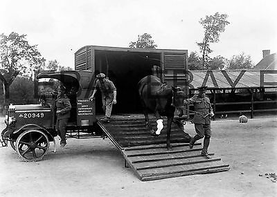WW1 Injured Cavalry Horse at Veterinary hospital World War One Photograph