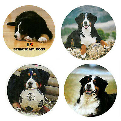 Bernese Mountain Dog Magnets:   4 Cool BMDs for your Collection-A Great Gift