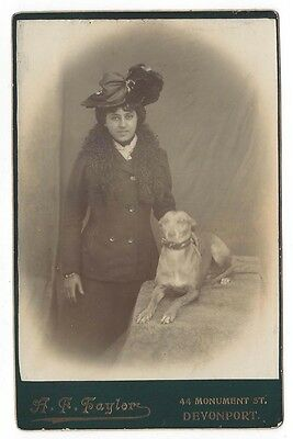 CABINET CARD Photograph Victorian Lady with Greyhound Dog by Taylor of Devonport