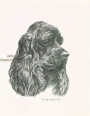 # 69 BLACK COCKER SPANIEL dog art print * Pen and ink drawing * Jan Jellins