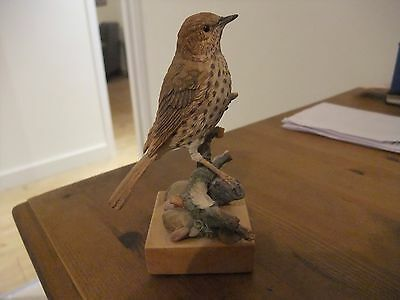 Country Artists Song Thrush On Branch 03669