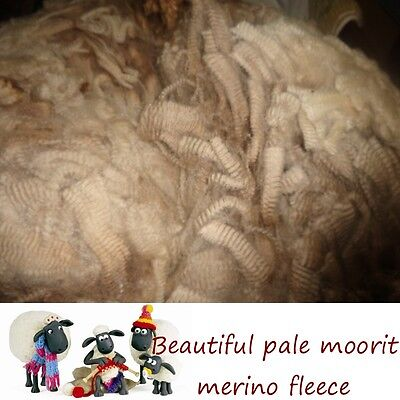 Beautiful Raw Fresh Shorn Very Pale Moorit Merino Fleece Spinning #2