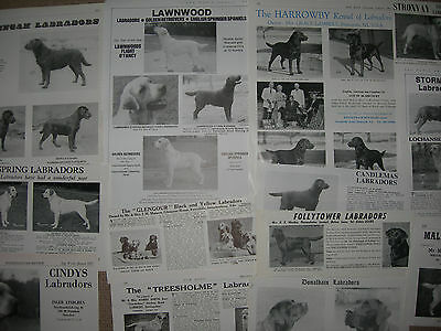 Labrador kennel breed clippings