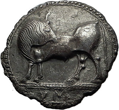 SYBARIS in LUCANIA 550BC Silver Nomos Stater Ancient Greek Coin with BULL i58574