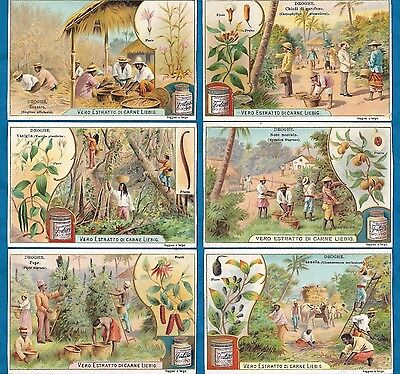 Set Of 6 Pretty Italian Liebig Cards - Spices - C1902
