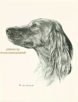 #29 IRISH SETTER  porttrait *  dog art print * Pen and ink drawing * Jan Jellins