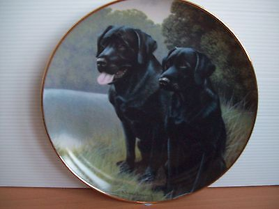Franklin Mint -  Labradors ,sporting Companions  Limited Edition Plate
