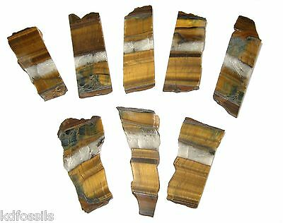 Archean Tiger Iron Stromatolite super golden layers South Africa cyanobacteria