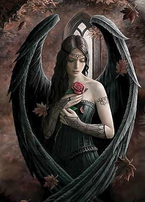 Anne Stokes Poster Angelrose