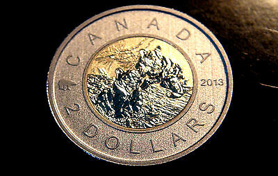 2013 Canada YOUNG BLACK BEAR TWO DOLLAR Coin – Nice SPECIMEN Canadian Toonie!