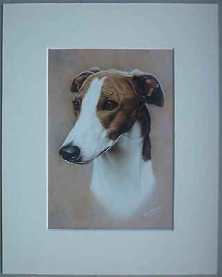 "Reduced - Greyhound By Ken Messom Dog Art Card Print Mounted 10 X 8"" - Sale"