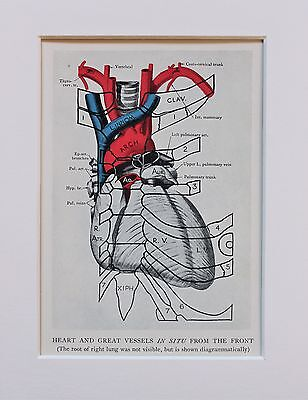 1930s Vintage Anatomy Print - Anatomical - Mounted - Heart Blood Vessels (15)
