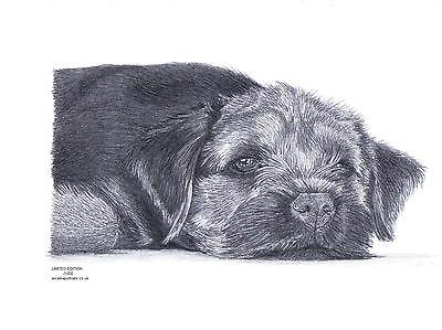 SPRINGER SPANIEL dog L E art drawing prints  2 sizes A4//A3 /&  card Available 3