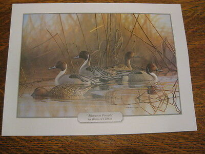 """DUCKS UNLIMITED """"AFTERNOON PINTAILS"""" PRINT by Richard Clifton 8.5"""" x 11.5"""""""