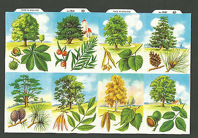 Mlp 1261 - Trees & Seeds Scraps - Mamelok Press Discontinued Double Sheet