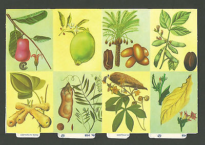 Mlp 1458 - Fruit, Nuts & Seeds Scraps - Mamelok Press Discontinued Double Sheet