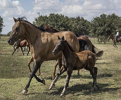 Horses Mare And Colt Computer Mouse Pad  #5  9 X 7