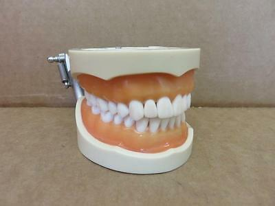 Nissin Dental Typodont Model 200 with 32 Removable Teeth