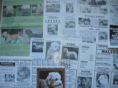 Glen of Imaal Terrier kennel breed clippings