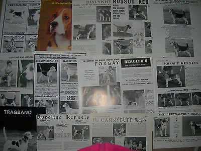 Beagle kennel breed clippings