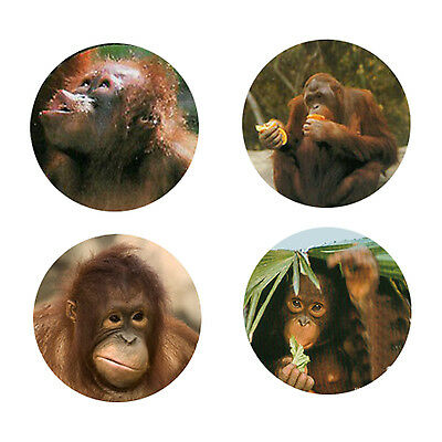 Orangutan Magnets:4 Cool Orangutans for your Fridge or Collection-A Great Gift
