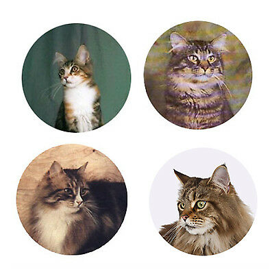 Maine Coon  Magnets: 4 Maine Coons for your Fridge or Collection-A Great Gift