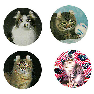 American Curl Magnets: 4 Cool Curls for your Fridge or Collection-A Great Gift
