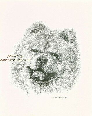 # 85 CHOW CHOW portrait  dog art print * Pen and ink drawing * Jan Jellins